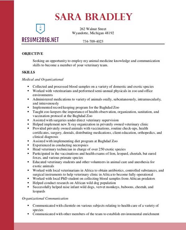 best resume format 2016 - What Is The Best Resume Format