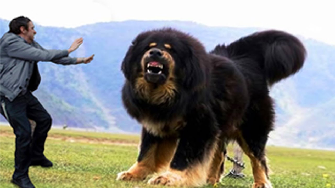 Big Vicious Dog Breeds