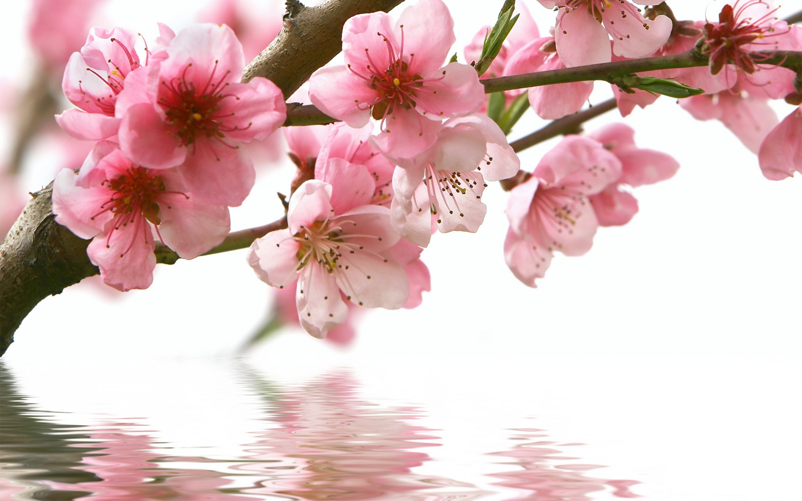 Spring Flowers Fotolip Rich Image And Wallpaper