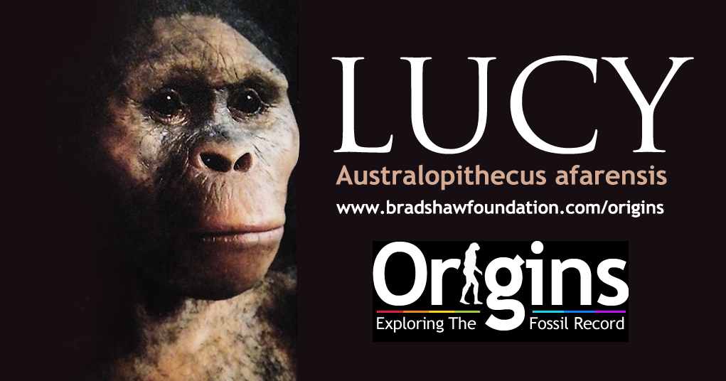 Lucy Australopithecus Fotolip Com Rich Image And Wallpaper